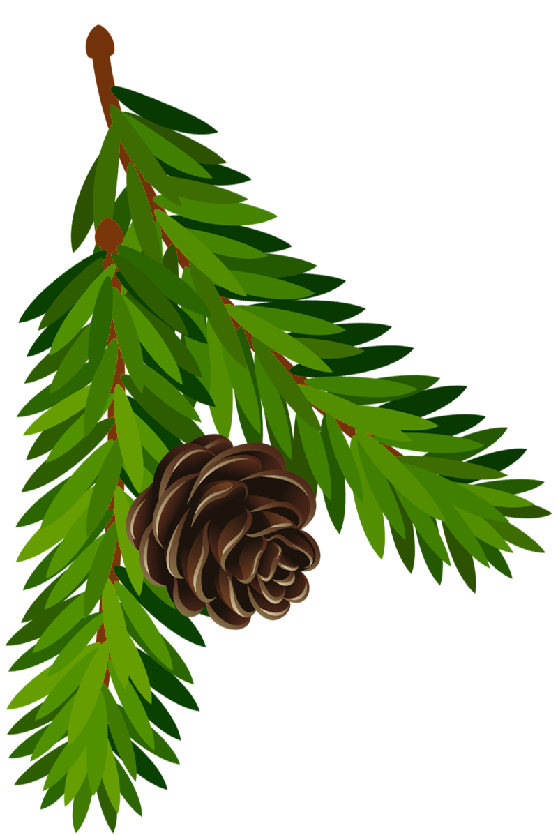 800x1197 Transparent Pine Branch With Cone Png Artu200b Gallery Yopriceville