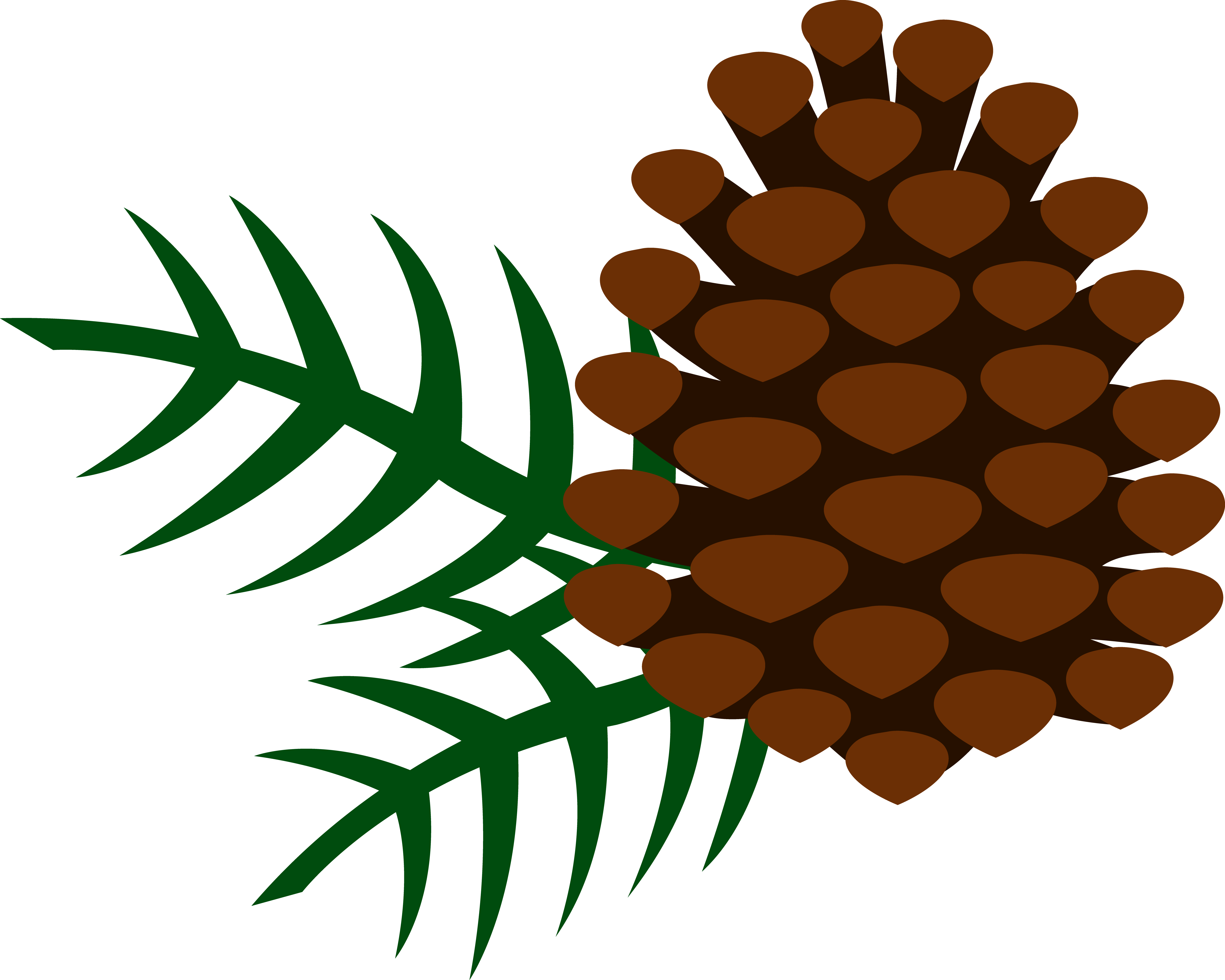 6543x5237 Pine Cones Pine Cone And Pine Needles