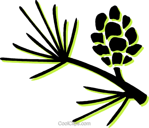 480x413 Pine Leaves And Pinecone Royalty Free Vector Clip Art Illustration