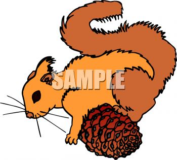 350x315 A Squirrel With A Pine Cone