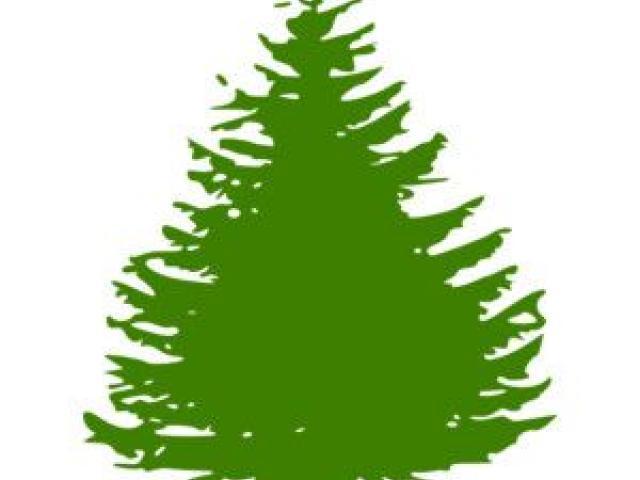640x480 Pine Tree Clipart