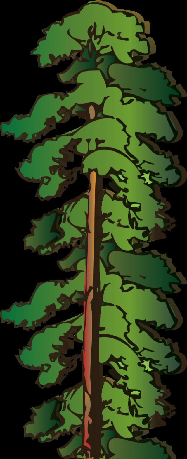 640x1565 Tall Tree Clip Art