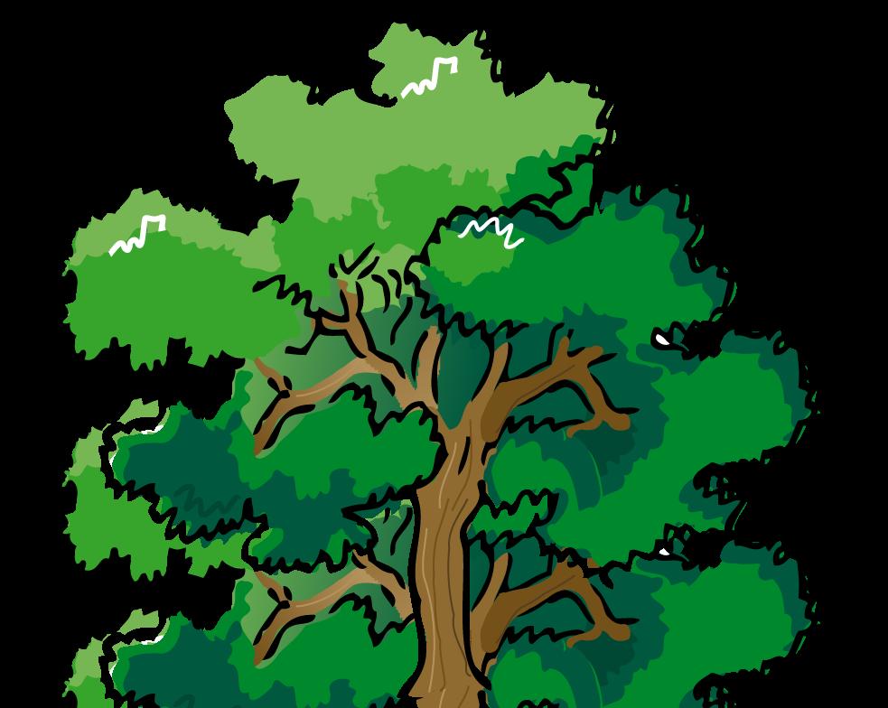 983x784 Clip Art Pine Trees. Trendy Winter Pine Tree Transparent Png Clip