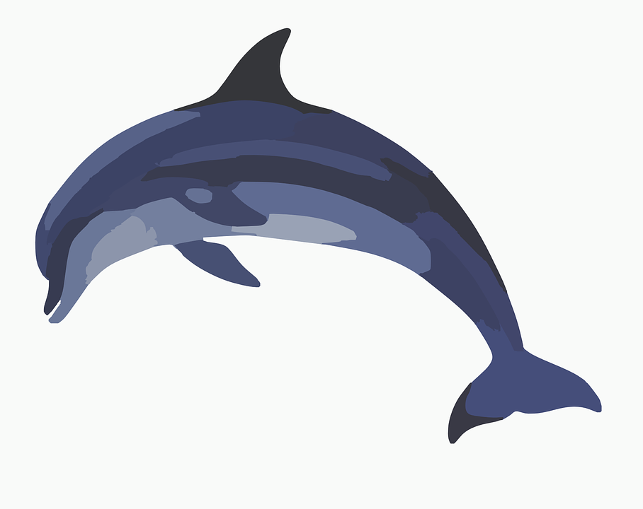 908x720 Free Vector Graphic Dolphin Mammal Animal Wildlife Clip Art