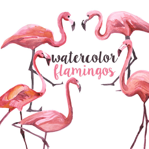 570x570 Watercolor Flamingo Clipart
