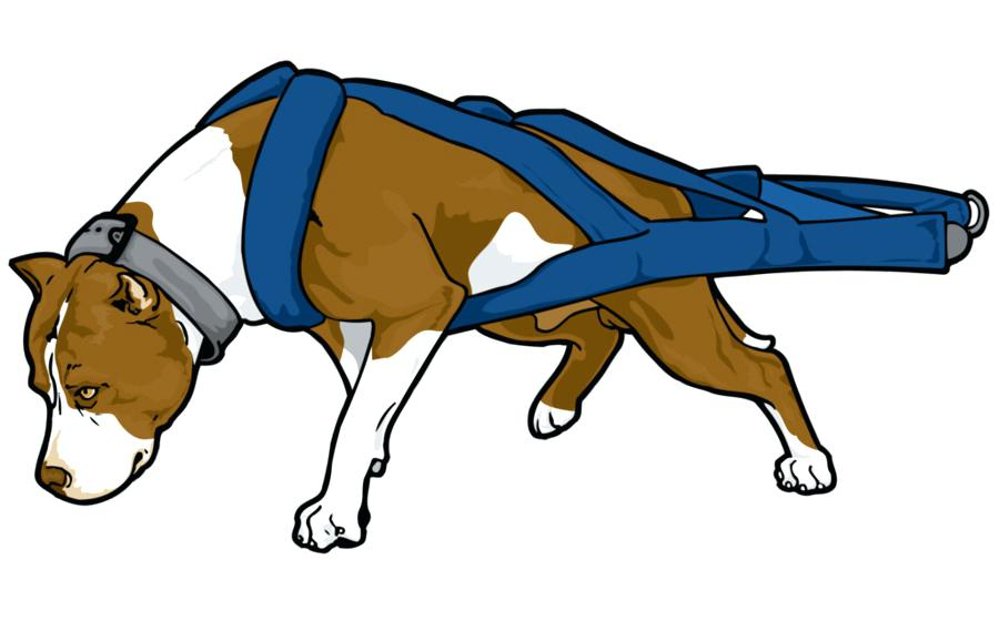 900x560 Ninja Turtles Clipart Pit Bull Terrier Bully Puppy Clip Art