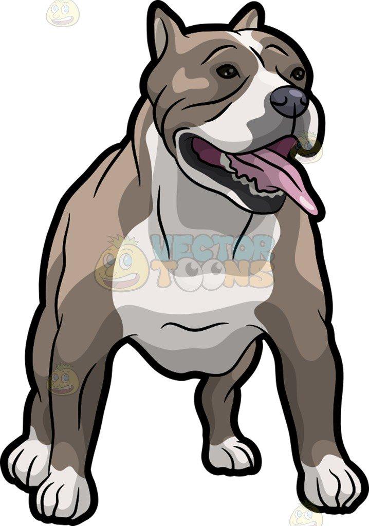 718x1024 A Strong Pit Bull Dog Cartoon Clipart Vector Toons