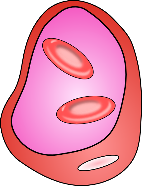 456x595 Erythrocyte Red Blood Cell Clip Art Free Vector 4vector