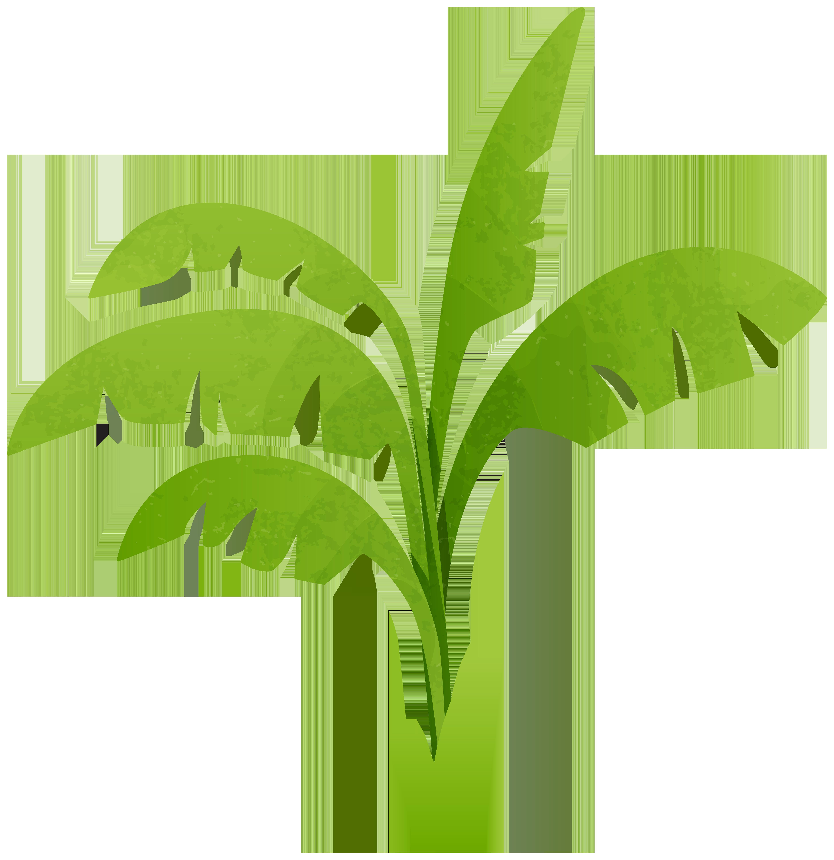 5814x6000 Green Plant Transparent Png Clip Art Imageu200b Gallery Yopriceville