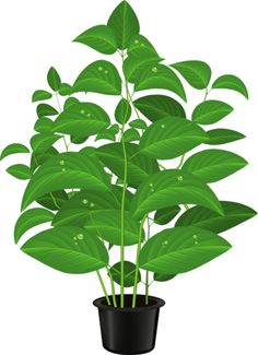 236x325 Potted Plant
