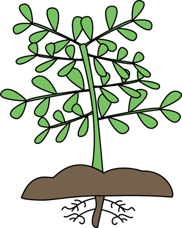 359x450 Plant With Roots Clip Art Clipart Panda