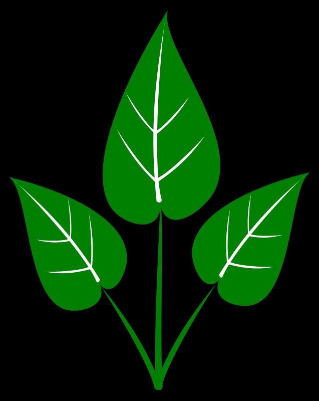 637x800 Free Leaf Clipart Leaf Clip Art Free Clipart Panda Free Clipart