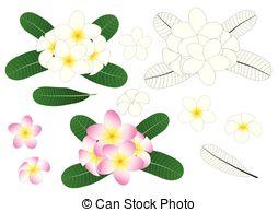 Plumeria Clipart