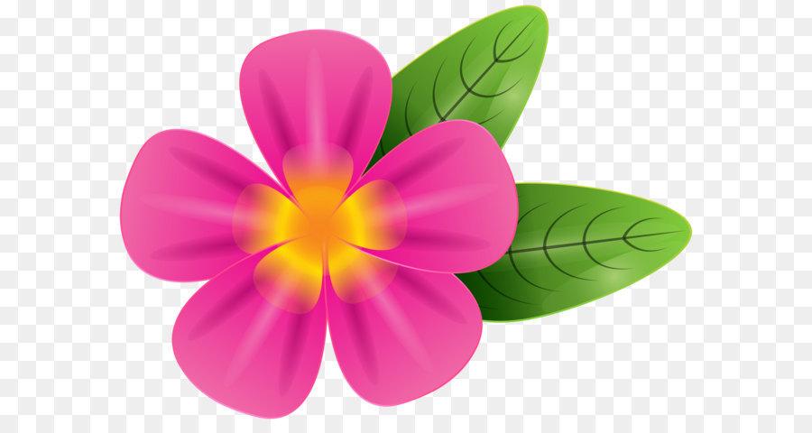 900x480 Frangipani Stock Photography Clip Art
