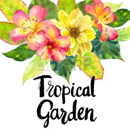 450x450 Plumeria Garden Clipart, Explore Pictures
