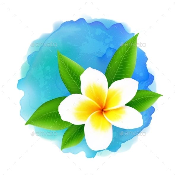 590x590 Vector Frangipani Flower On Blue Watercolor Watercolor And Flower