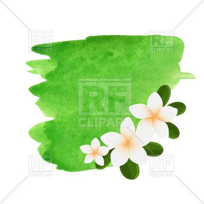 400x400 Watercolor Plumeria Flower Frame Royalty Free Vector Clip Art