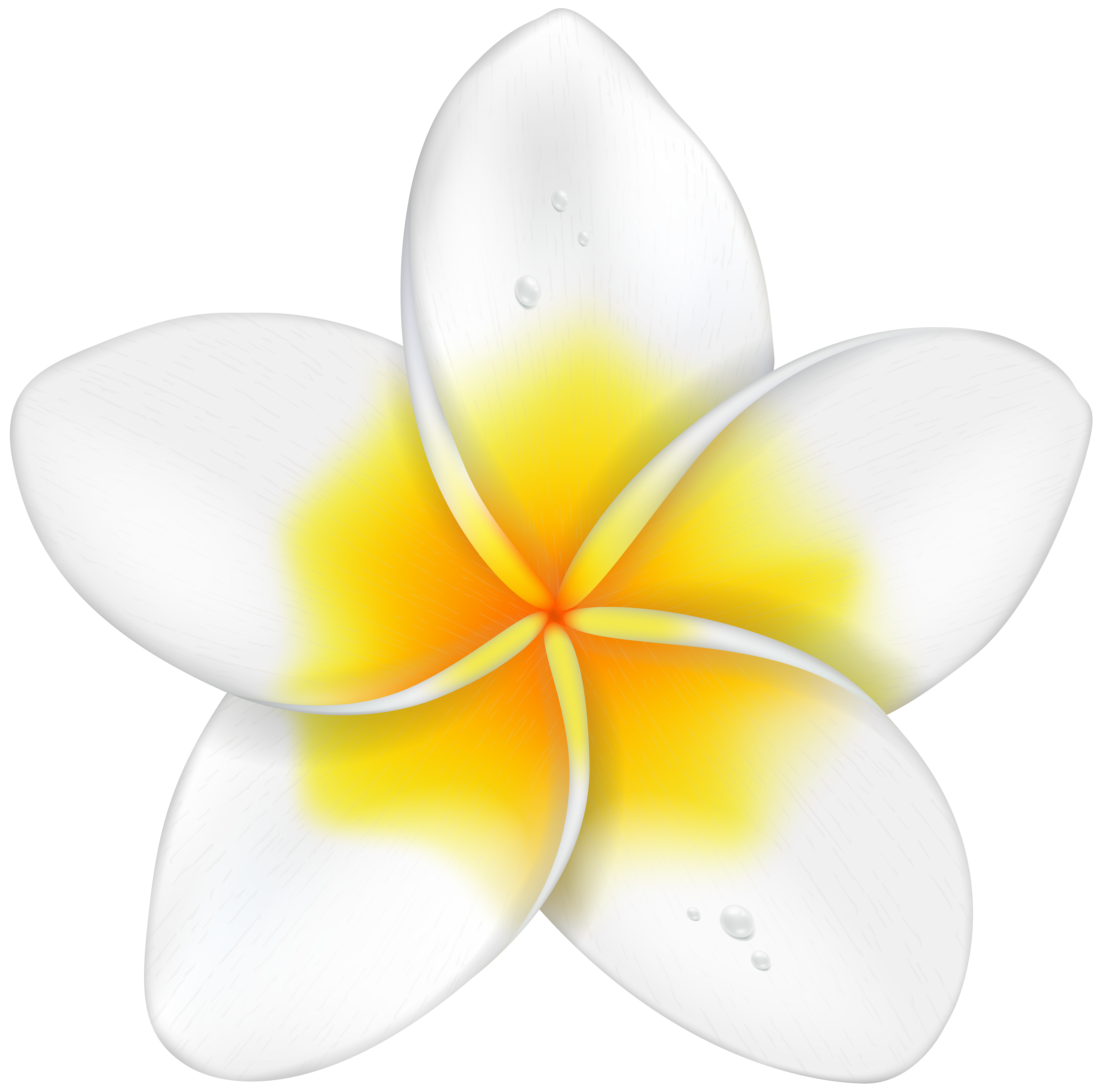 8000x7934 Exotic Flower Plumeria Png Clip Art Imageu200b Gallery Yopriceville