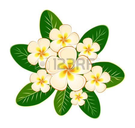 450x429 Plumeria Clipart Bali Flower