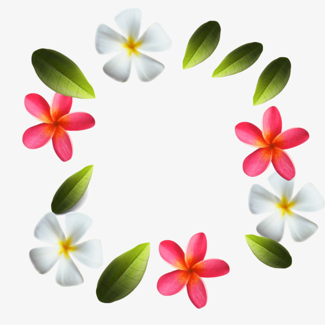 650x651 Plumeria Vector, Plumeria, Leaves Png And Vector For Free Download
