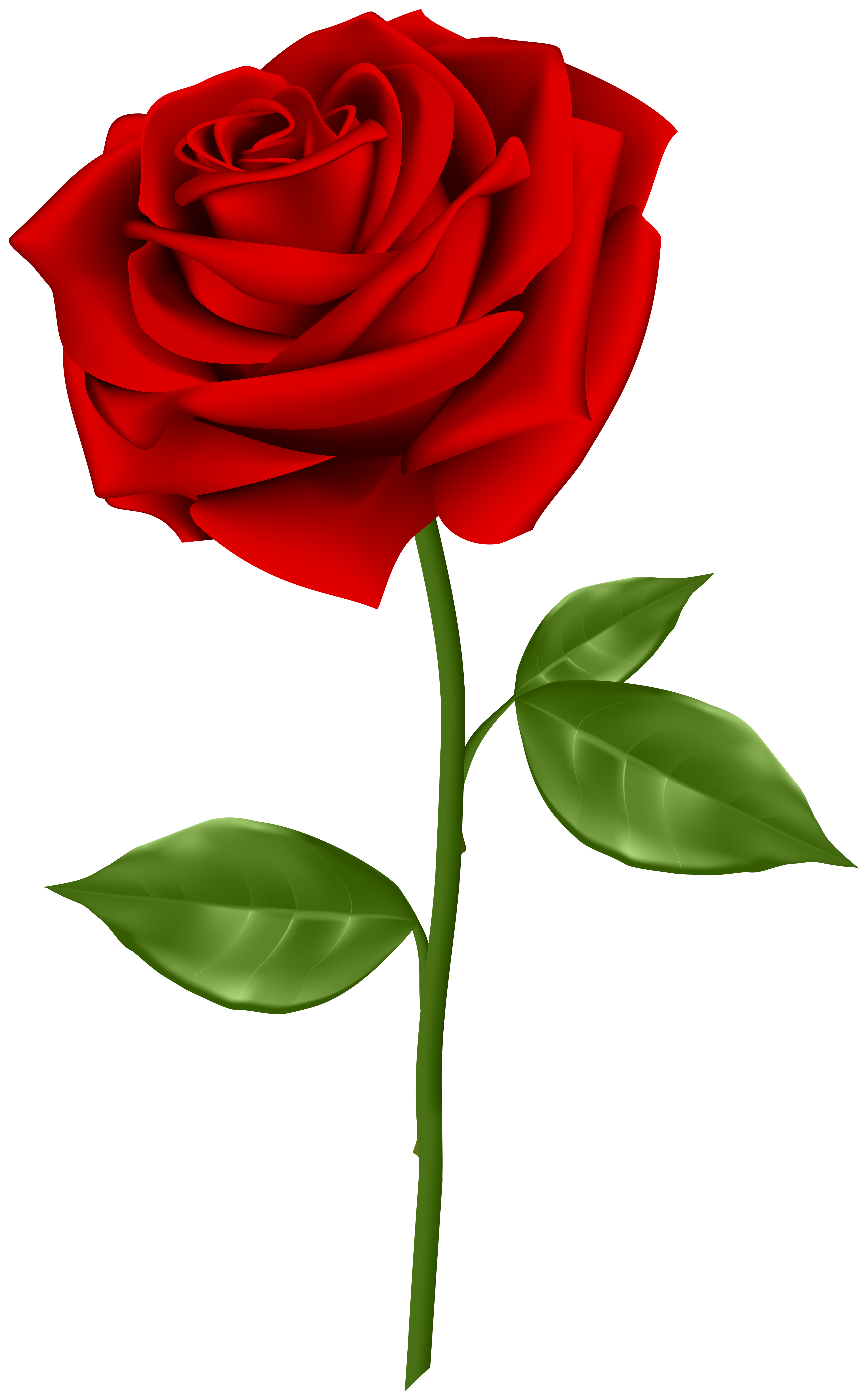 3729x6000 Red Rose Transparent Png Clip Artu200b Gallery Yopriceville
