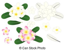 254x194 Champa Flower Vector Clipart Eps Images. 27 Champa Flower Clip Art