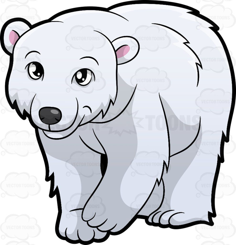 988x1024 A Friendly Looking Polar Bear Polar Bear
