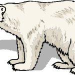 150x150 Polar Bear Clip Art Top 83 Polar Bear Clipart Free Clipart Spot