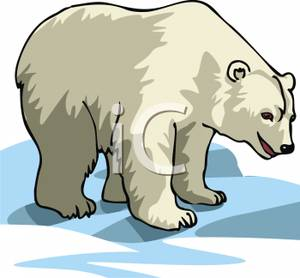 Polar Bear Cub Clipart