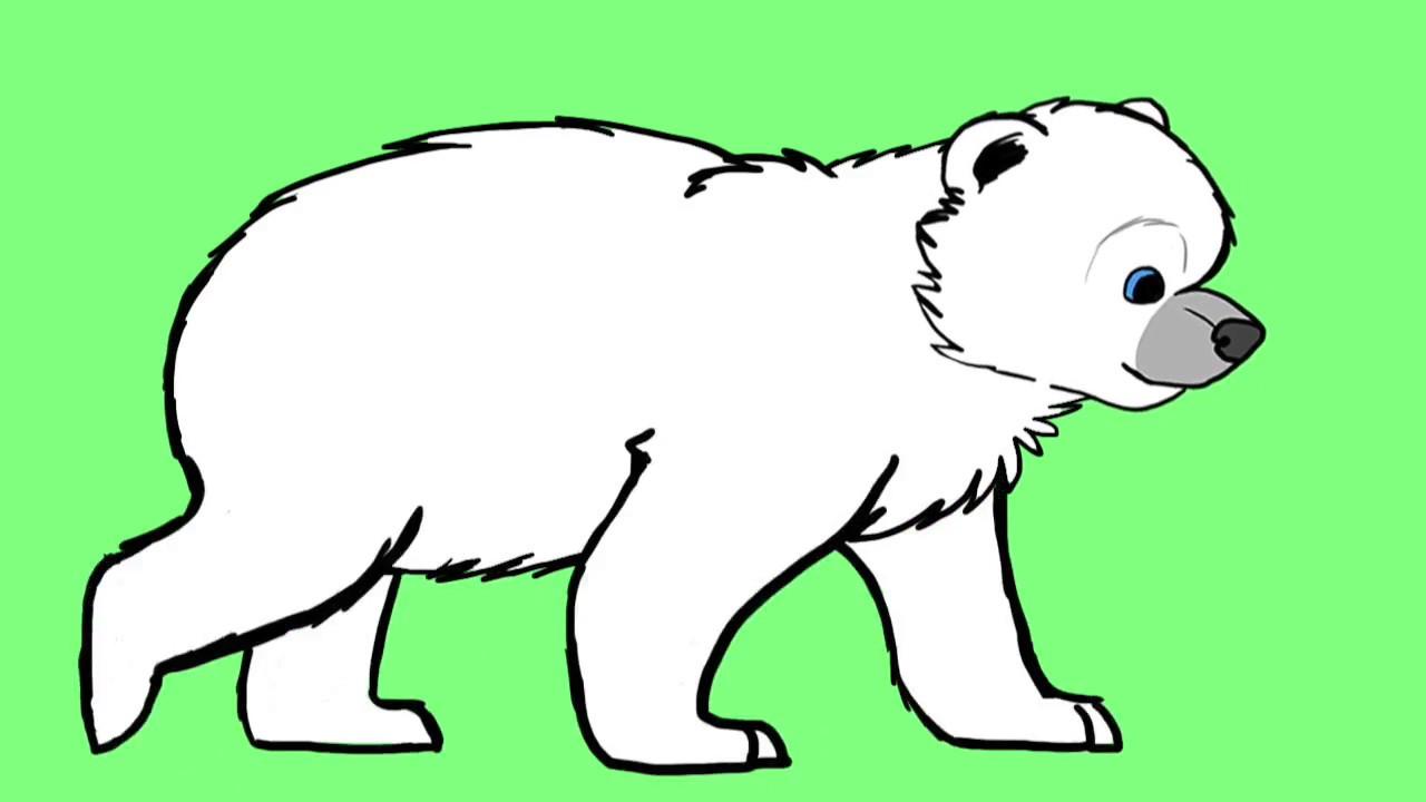 1280x720 Polar Bear Cub Walk Cycle