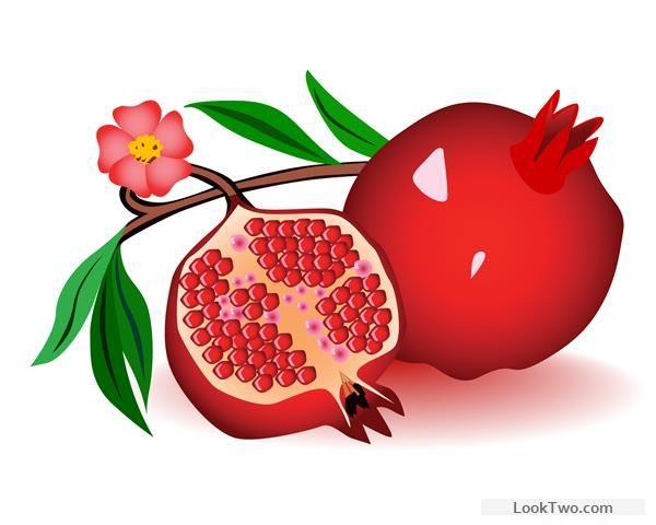600x480 Realistic Pomegranate Design Vector 01 Free Vector Download Free
