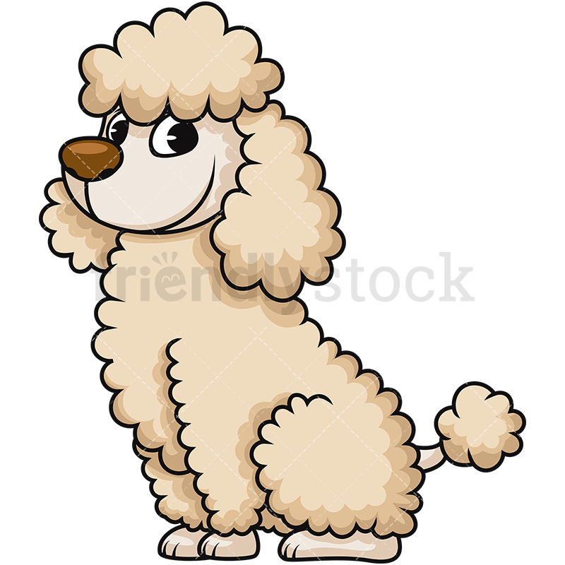 800x800 Cute Miniature Poodle Cartoon Vector Clipart