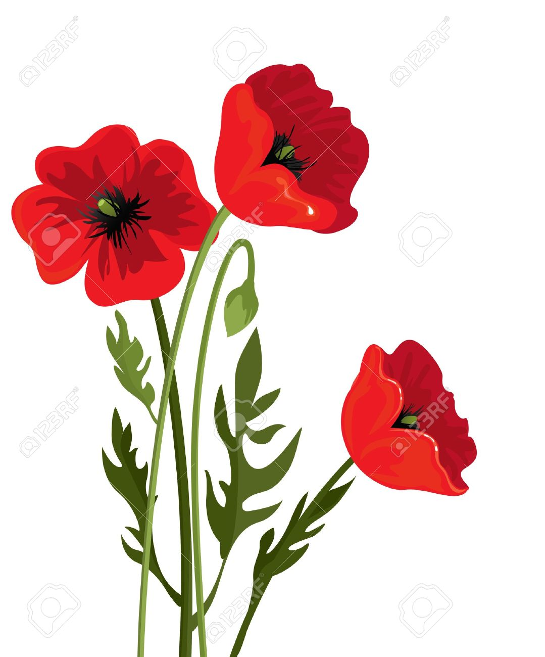 Poppy Clipart At Getdrawings Free For Personal Use Poppy