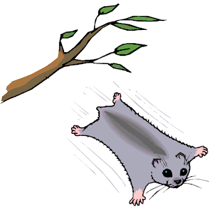 300x300 Flying Squirrel Clipart