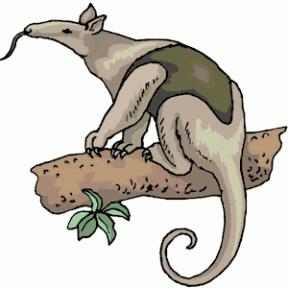 288x288 Chameleon Cliparts