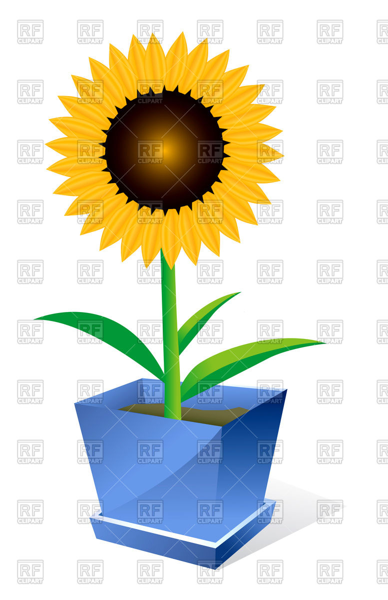 777x1200 Sunflower In Pot Royalty Free Vector Clip Art Image