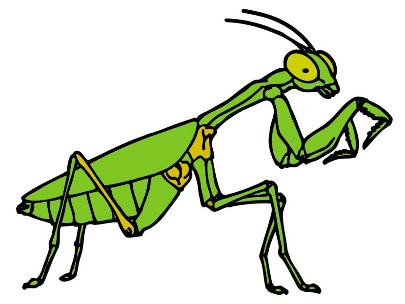 830x623 Best Mantis Clipart