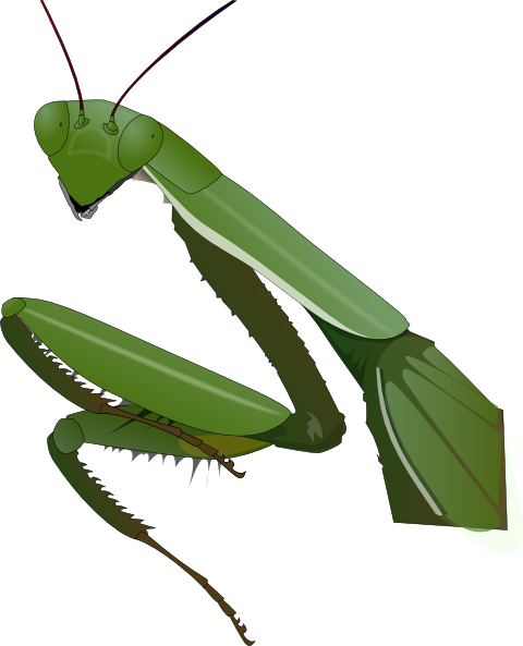 480x593 Praying Mantis Clip Art Free Vector 4vector