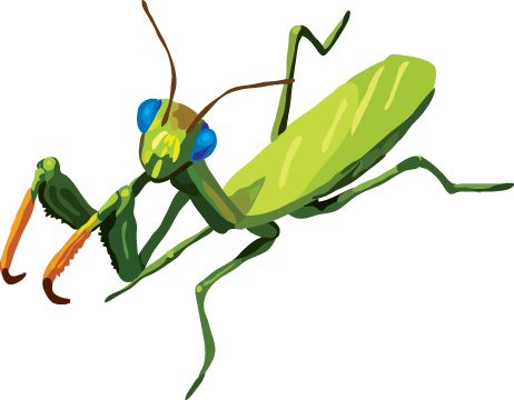 462x360 Praying Mantis Clip Art Clipart Panda