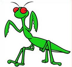 240x224 Free Praying Mantis Clipart