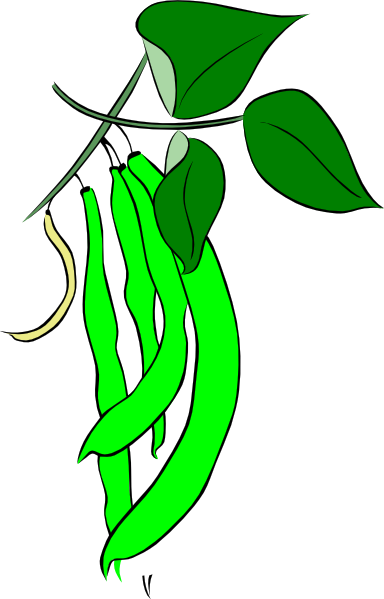 384x599 Pea Clipart Long Bean