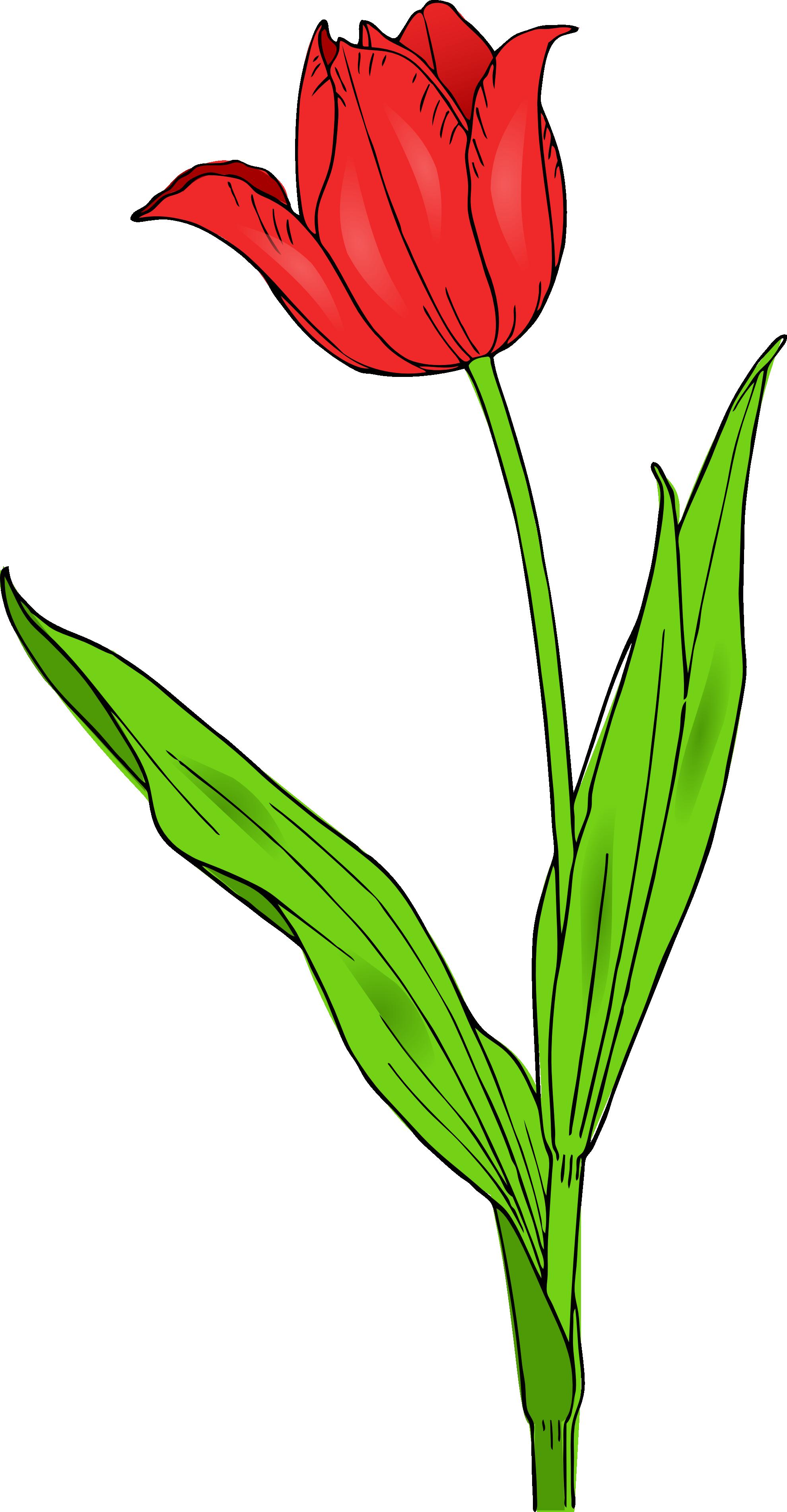 1979x3803 6 Tulip Images Clip Art. Clipart Panda