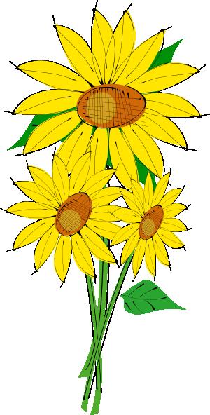 300x592 Sunflower Clip Art Free Printable Clipart 2 2