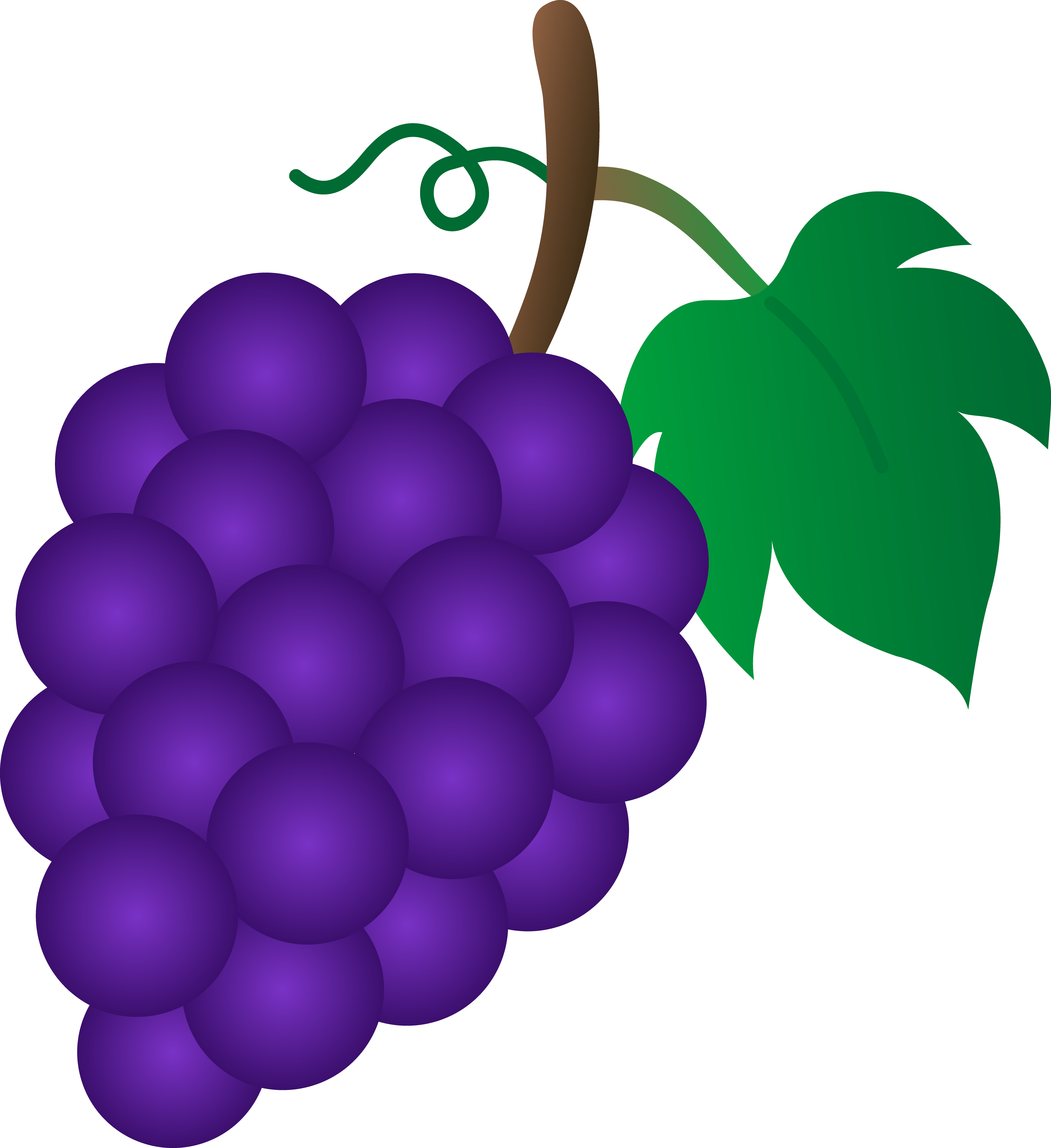 4801x5243 Bunch Of Purple Grapes