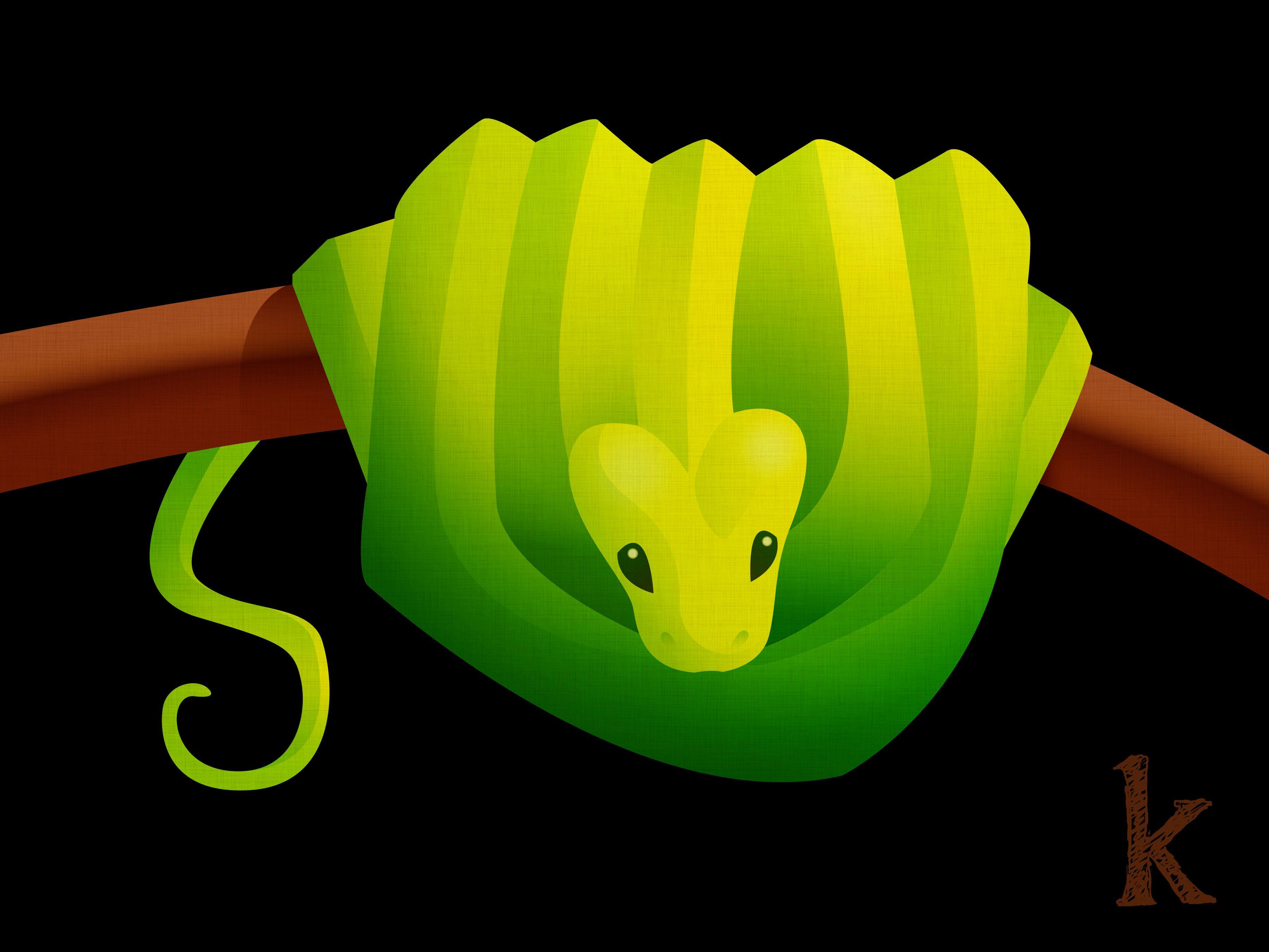 3600x2700 Green Tree Python Karianne Hutchinson Illustration Vector