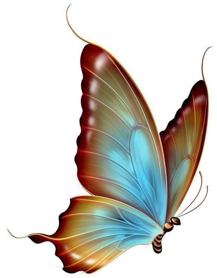 750x960 Pin By Viktoriya Vedernikova On Butterfly