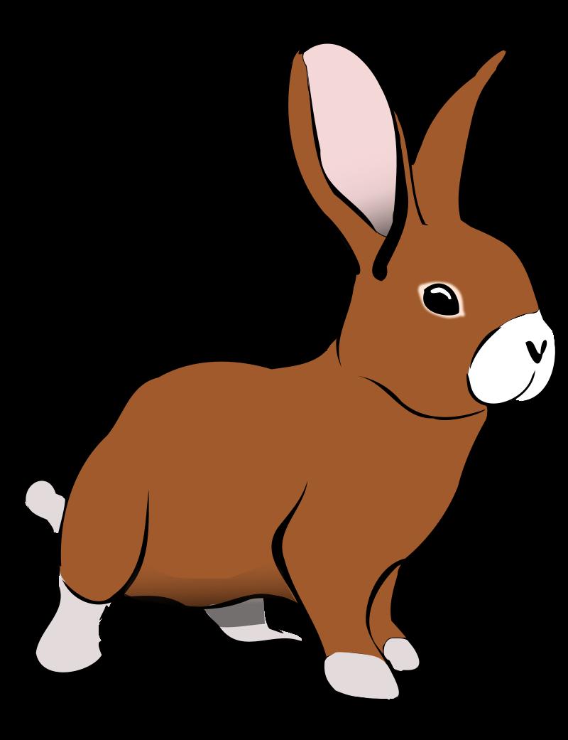 800x1041 Cute Bunny Clipart