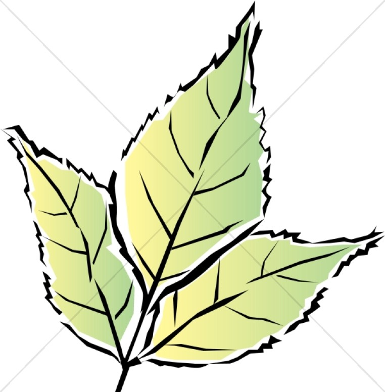 762x776 Colorful Green Tri Leaf Leaf Clipart