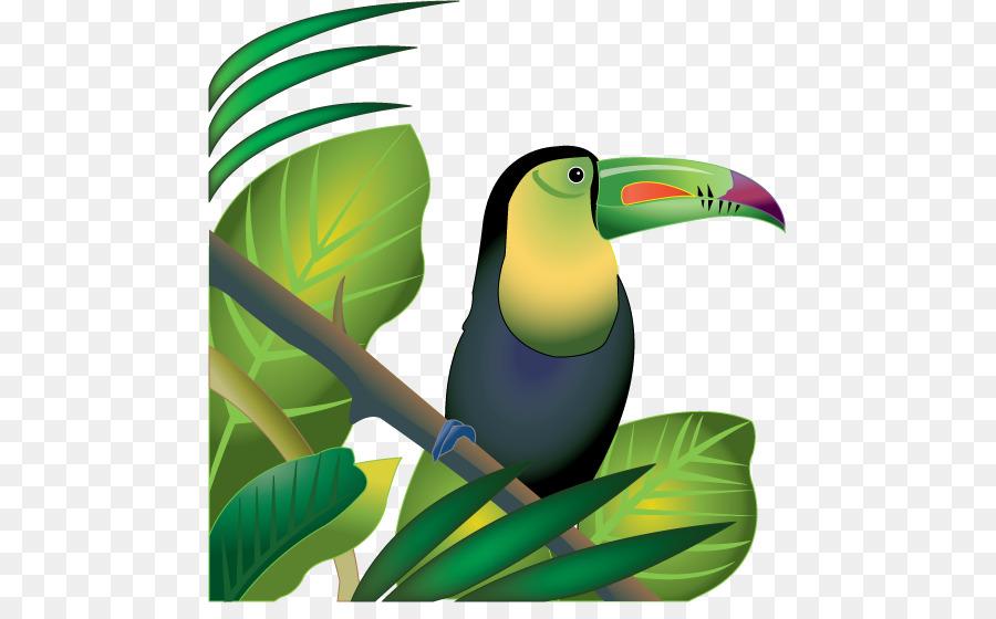 900x560 Amazon Rainforest Tropical Rainforest Jungle Clip Art