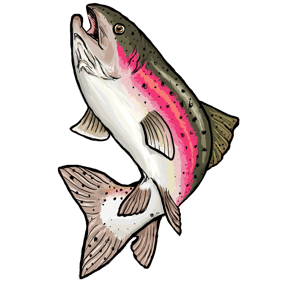 900x900 Rainbow Trout By Clairestclara